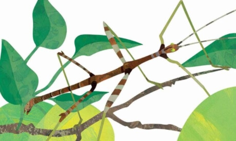 Image of the cover of the book Good Trick Walking Stick displaying a cartoon walking stick insect.