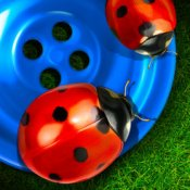 Two ladybugs sit on a blue button in the grass