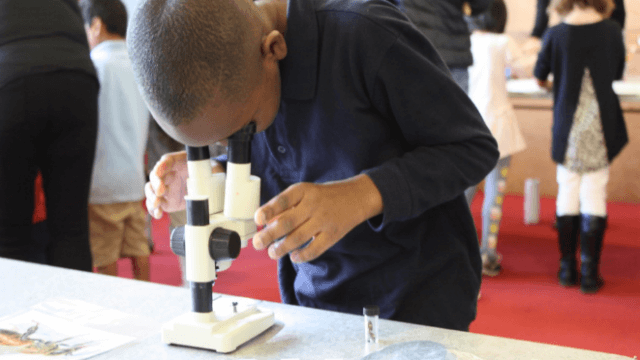 A child looking at slides through a microscope