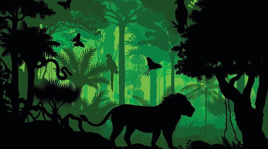 Rain forest animal silhouettes against a green jungle background