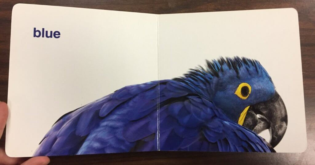 First page of the book Creature Colors by Andrew Zuckerman featuring a close-up photograph of a blue bird with the word blue to the left.